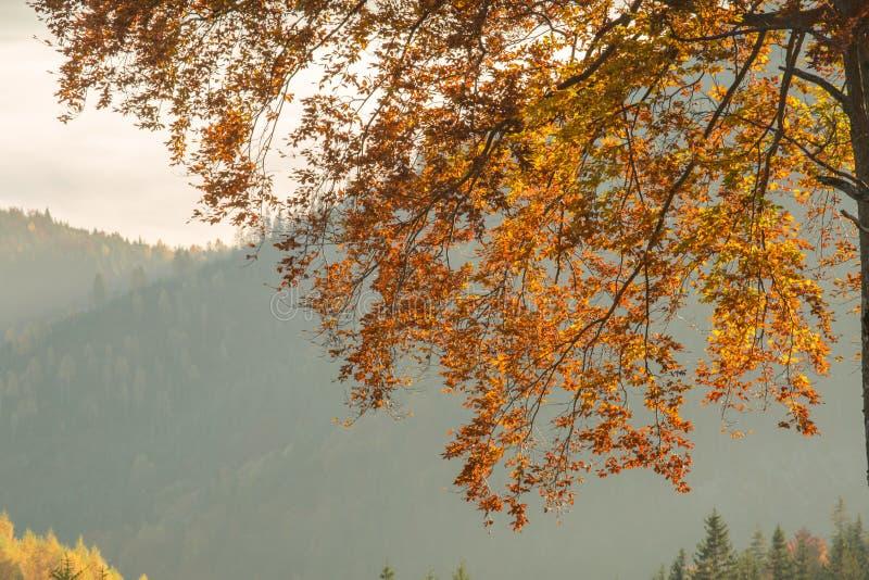 Herbstwald in den Bergen lizenzfreie stockfotografie