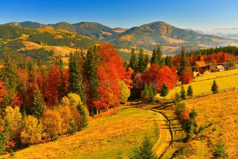 Herbstwald, der in jeder Farbe und in Schatten glänzt lizenzfreies stockbild