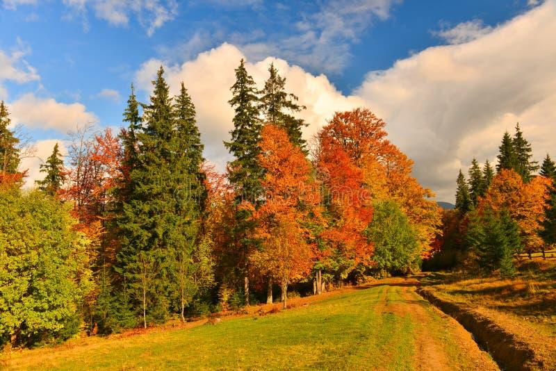 Herbstwald, der in jeder Farbe und in Schatten glänzt stockfotografie