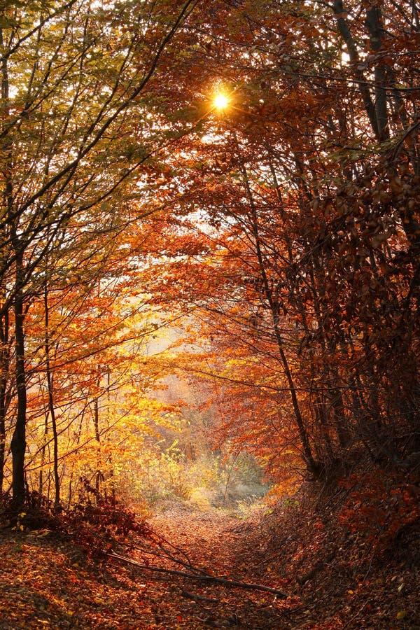 Herbstwald gegen Sonnenuntergang stockfotografie