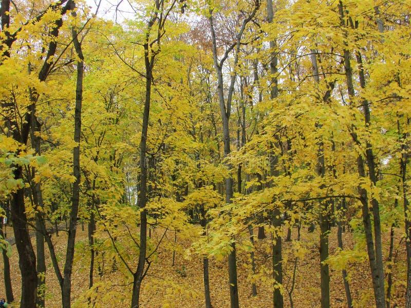 Herbstwald Gomel lizenzfreies stockfoto