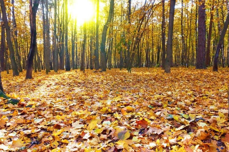 Herbstwald - Landschaft stockfotos