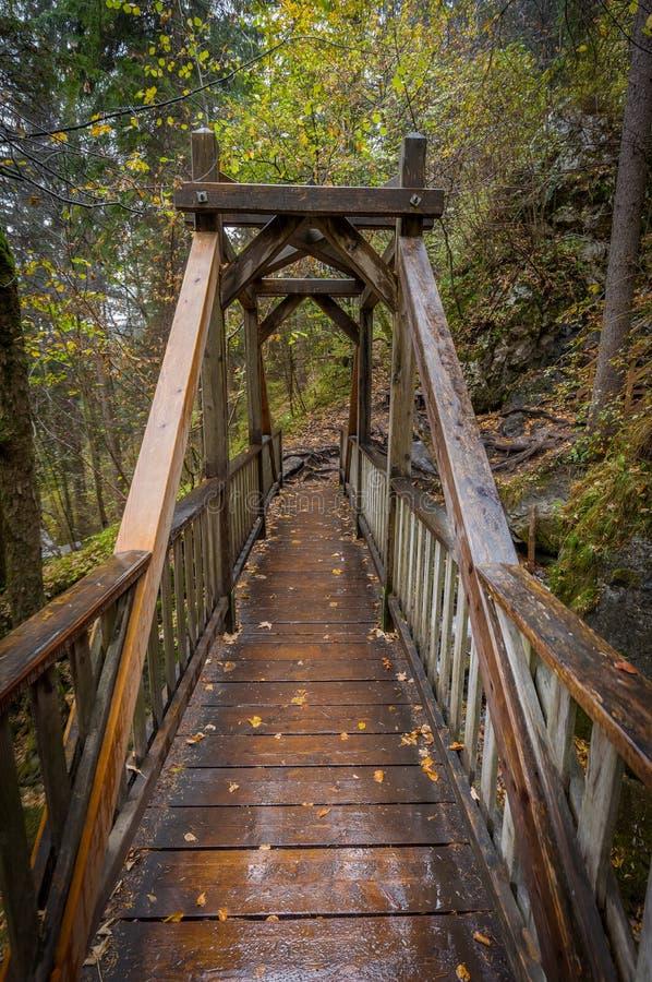Herbstwald mit Ansicht über Holzbrücke über Myrafälle lizenzfreie stockfotografie