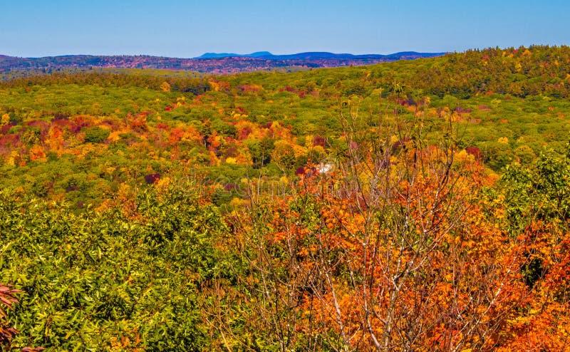 Herbstwald mit Hügeln im Abstand lizenzfreie stockbilder