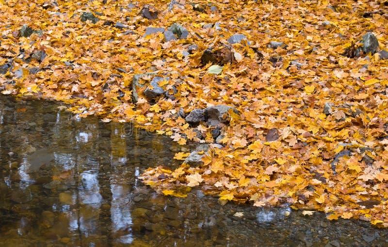 Herbstwald mit kleinem Bach und orange Laub stockfoto