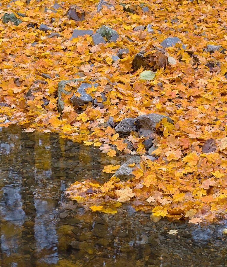 Herbstwald mit kleinem Bach und orange Laub stockfotografie