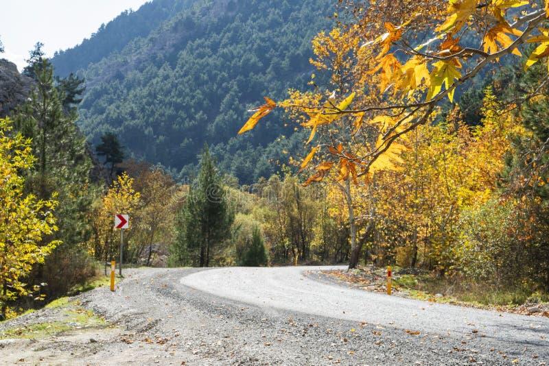 Herbstwald mit Landstraße bei Sonnenuntergang Bunte Landschaftwi stockbilder