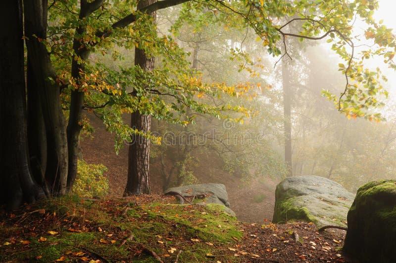 Herbstwald mit Nebel lizenzfreies stockfoto