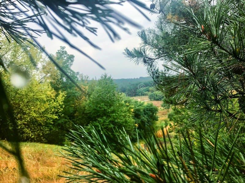 Herbstwald nach dem Regen lizenzfreies stockbild