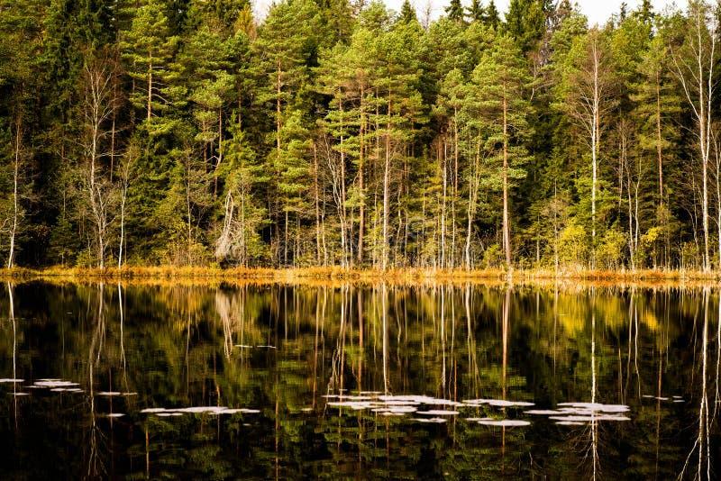 Herbstwald und ein See lizenzfreies stockfoto