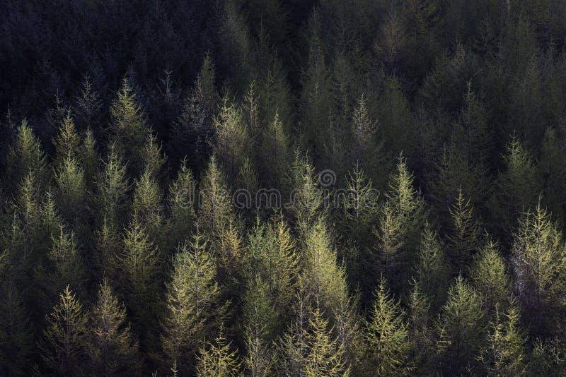Herbstwald von oben stockbilder