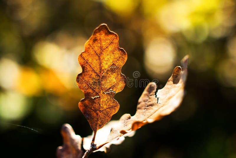 Herbstwaldblätter in der Tschechischen Republik lizenzfreies stockbild
