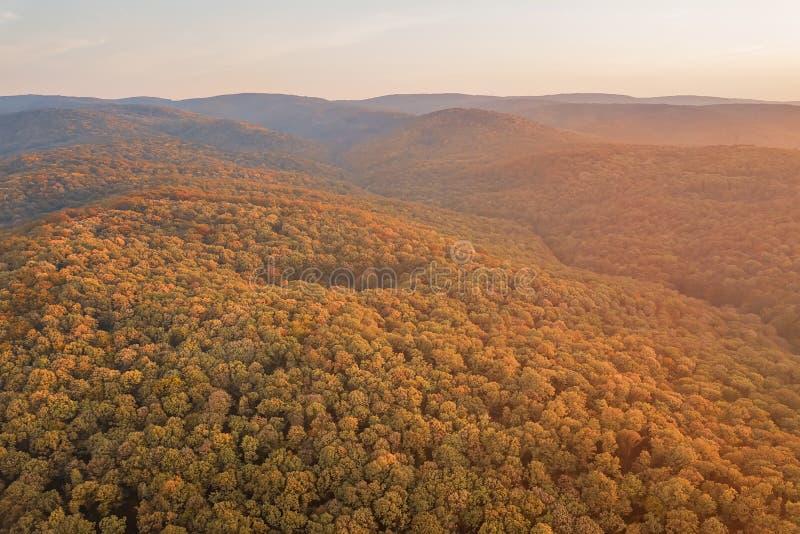 Herbstwaldbunte Baum- und -blattvogelperspektive stockfotografie