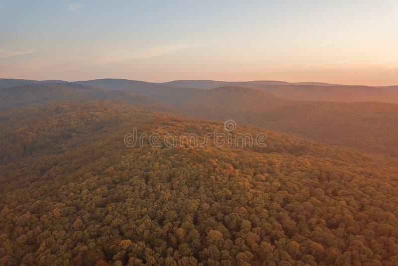 Herbstwaldbunte Baum- und -blattvogelperspektive stockbilder