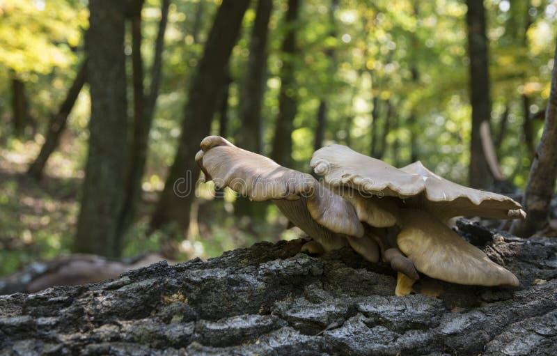 Herbstwalddetail lizenzfreies stockbild