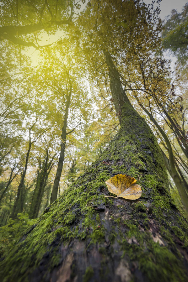 Herbstwalddetail stockfotos