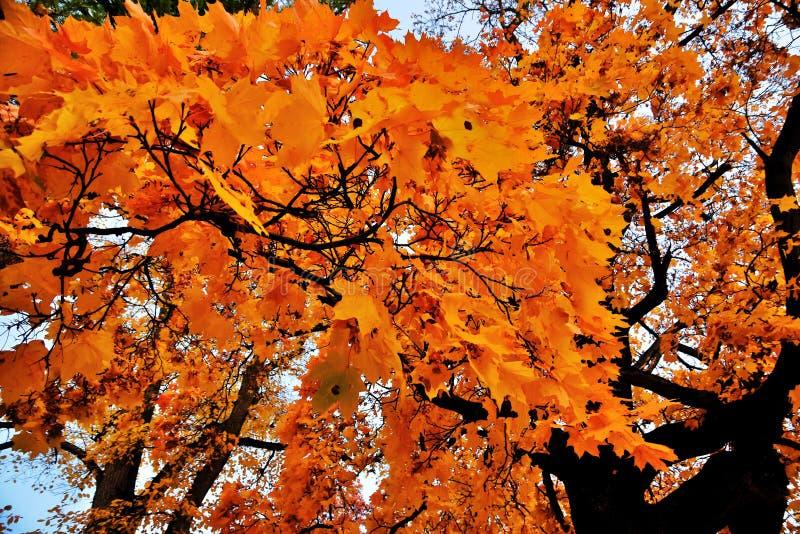 Herbstwaldfarbfoto eingelassener Tsaritsyno-Park in Moskau lizenzfreie stockfotos