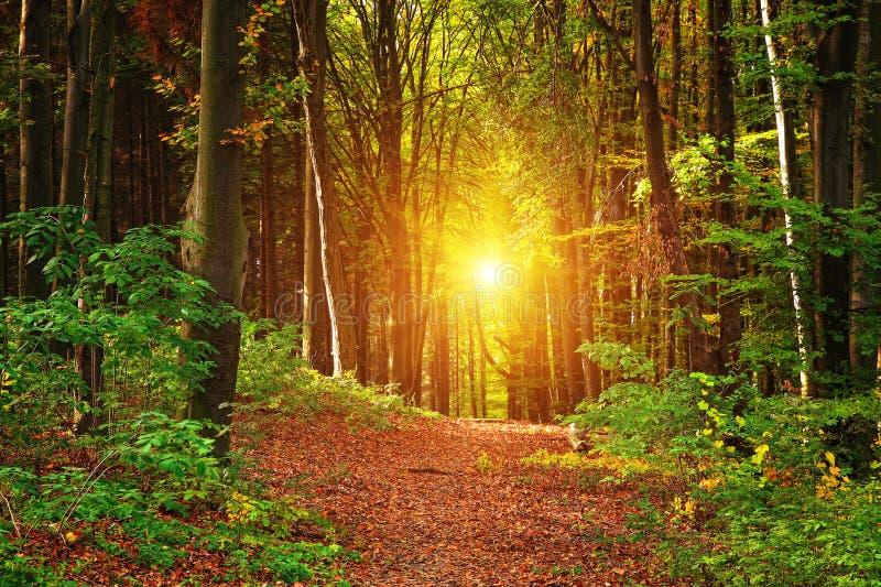 Herbstwaldlandschaft lizenzfreie stockfotos