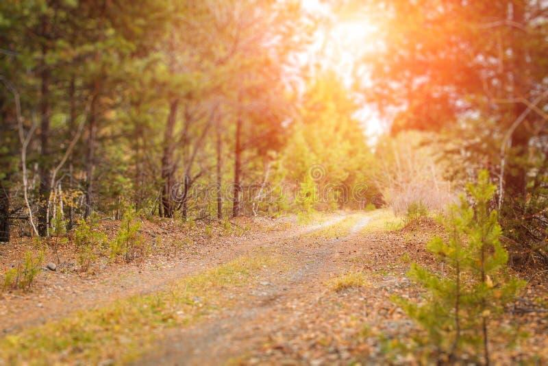 Herbstwaldlandschaft mit den Strahlen des warmen Lichtes das Goldlaub und einen Fußweg mit Neigungsverschiebungeffekt erhellend stockfotos