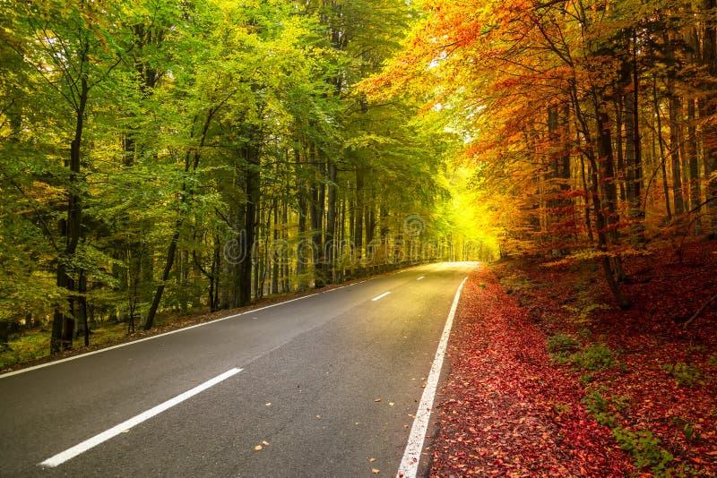 Herbstwaldlandschaft mit Strahlen des warmem hellem Belichtens stockfoto