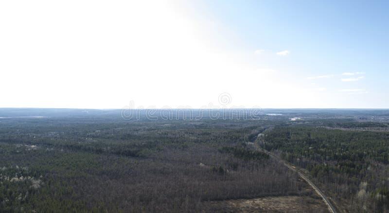 Herbstwaldluftbrummenansicht im Fr?hjahr lizenzfreie stockfotografie