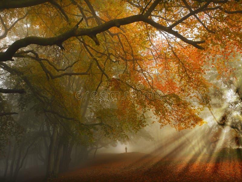 Herbstwaldpfad lizenzfreies stockfoto