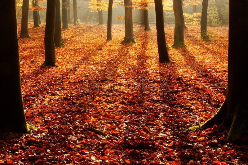 Herbstwaldschatten lizenzfreies stockbild