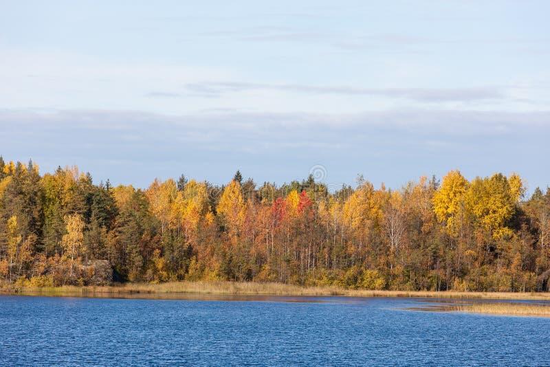 Herbstwaldseeufer stockfotografie