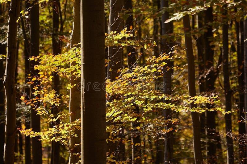 Herbstwaldsonnenschein stockfotografie