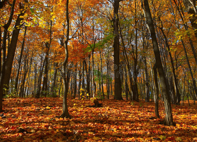 Herbstwaldszene stockfoto