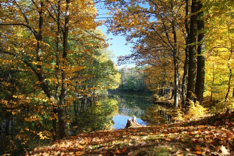 Herbstwaldteich lizenzfreie stockbilder