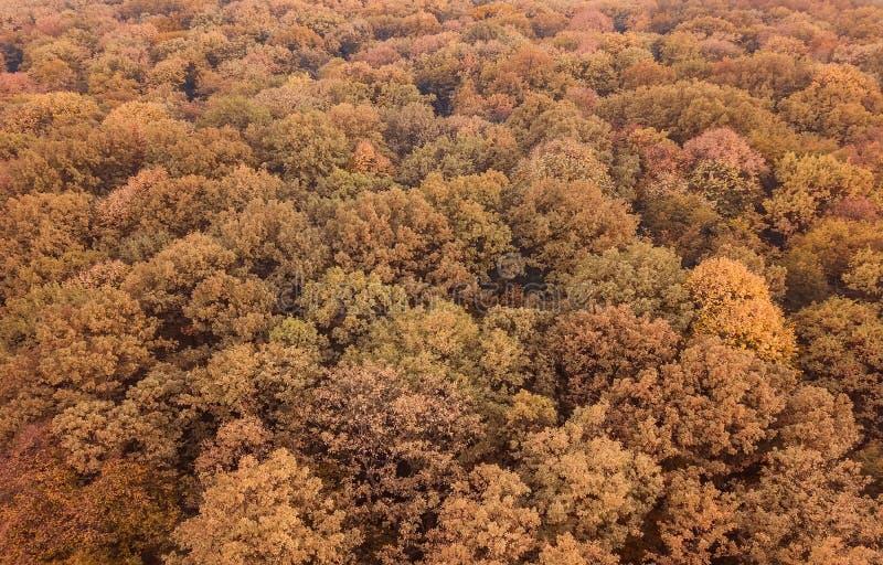 Herbstwaldvogelperspektive Draufsichtherbstlaub stockfotografie