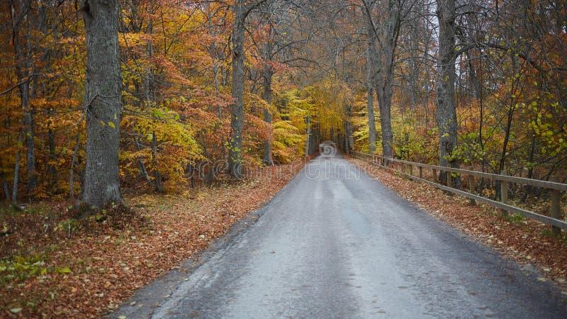 Herbstwaldwald mit Landstraße bei Sonnenuntergang Bunte Landschaft mit Bäumen, Landstraße, Orangenblättern und blauem Himmel stockfotos