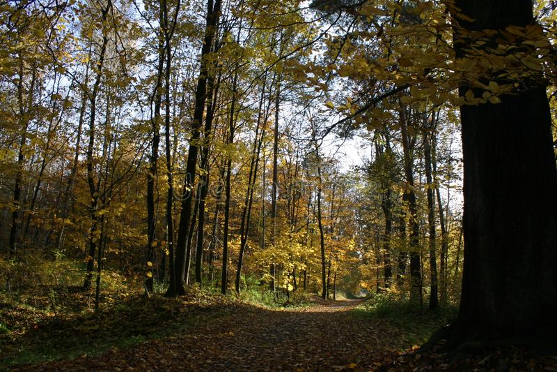 HerbstWaldweg 02 stockfoto