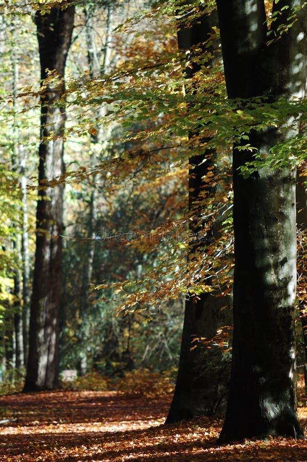 Herbstwaldweg stockbild