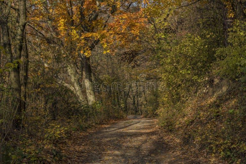 Herbstwaldweg am sonnigen Tag stockbilder