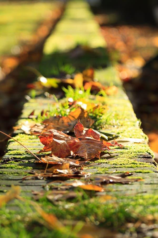 Herbstwand lizenzfreies stockbild
