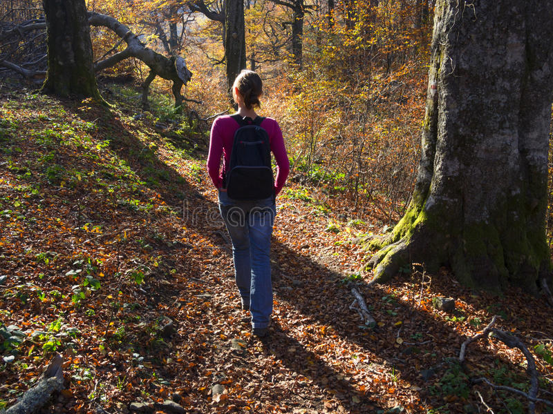 Herbstweg im Wald lizenzfreie stockbilder