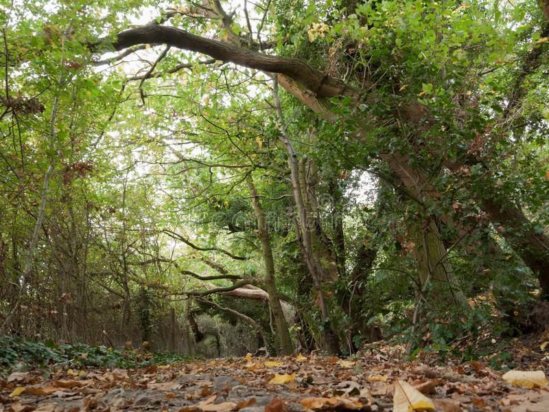 Herbstweg-Wegweise durch den Baumwald holloway lizenzfreie stockfotografie