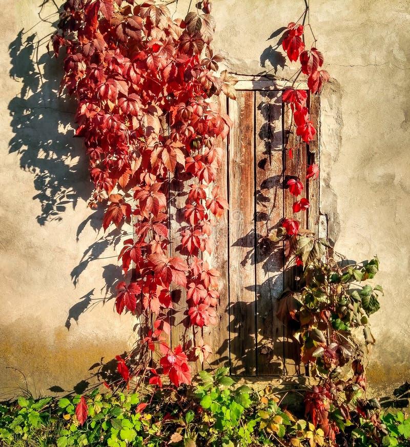 Herbstweinlesehintergrund mit roten Blättern lizenzfreies stockfoto