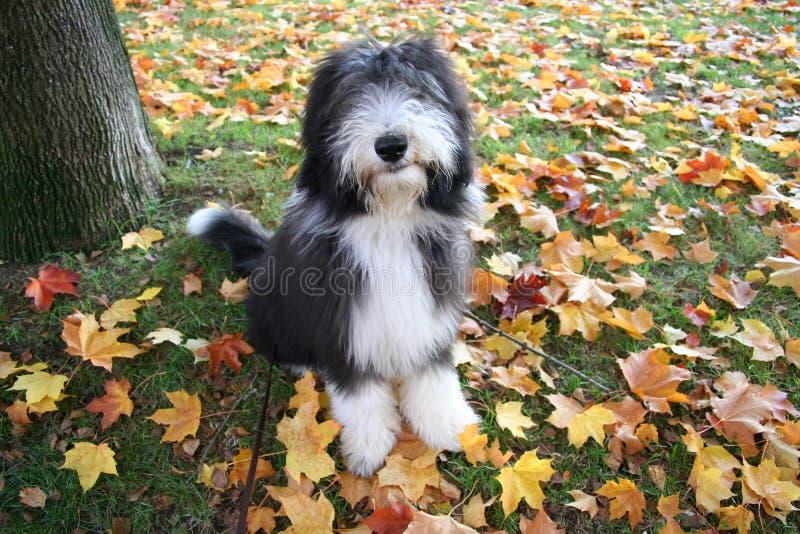 Herbstwelpe stockfotos