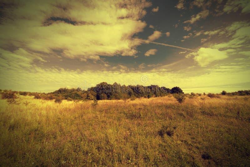 Herbstwiesenlandschaft stockfoto