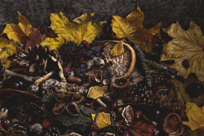 Herbstzerfall lizenzfreie stockfotografie