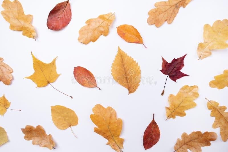 Herbstzusammensetzung Muster machte vom flach gelegten Herbstlaub, Draufsicht, Kopienraum stockfotos