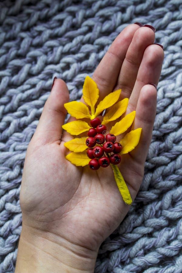 Herbstzweig der Eberesche in seinen Händen auf der weichen warmen Wolldecke lizenzfreies stockbild