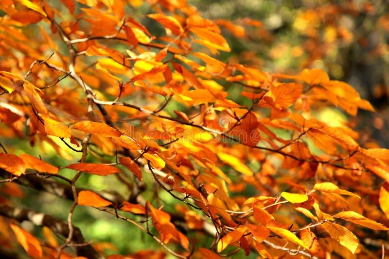 Herbstzweige stockbilder