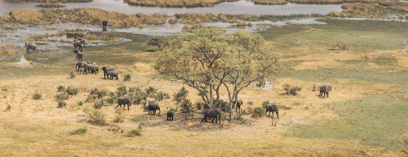 Herd of elephants in the Okavango Delta aerial view stock images