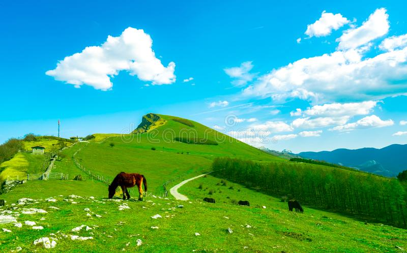 Herd of horse grazing at hill with beautiful blue sky and white clouds. Horse farming ranch. Animal pasture.  Landscape of green. Grass field on the mountain royalty free stock photos