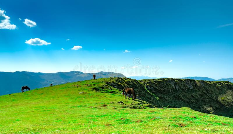 Herd of horse grazing at hill with beautiful blue sky and white clouds. Horse organic farming. Animal pasture.  Landscape of green. Grass field on the mountain stock photo