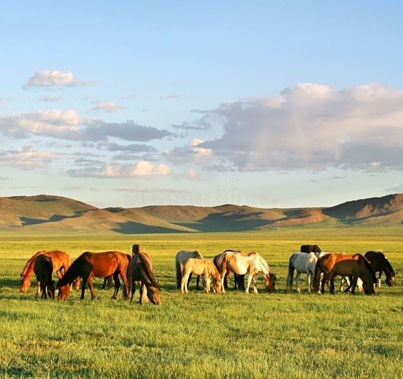 Herd of horses stock image